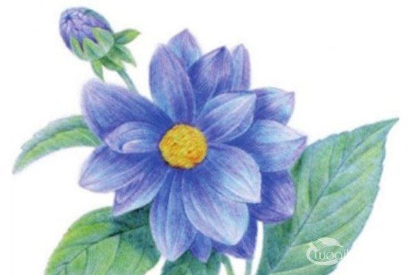 水粉画教程花卉