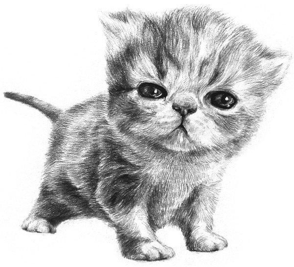 1、大致描绘出小猫的头和身体的外轮廓,用十字定出小猫脸中心的位置,小猫的头和身体差不多大。  素描小猫咪的绘画步骤一 2、进一步描绘小猫五官的轮廓。眼睛大约位于脸部中间的位置,两眼间的距离为一只半眼左右,鼻尖和下眼眶位于一条线上。  素描小猫咪的绘画步骤二