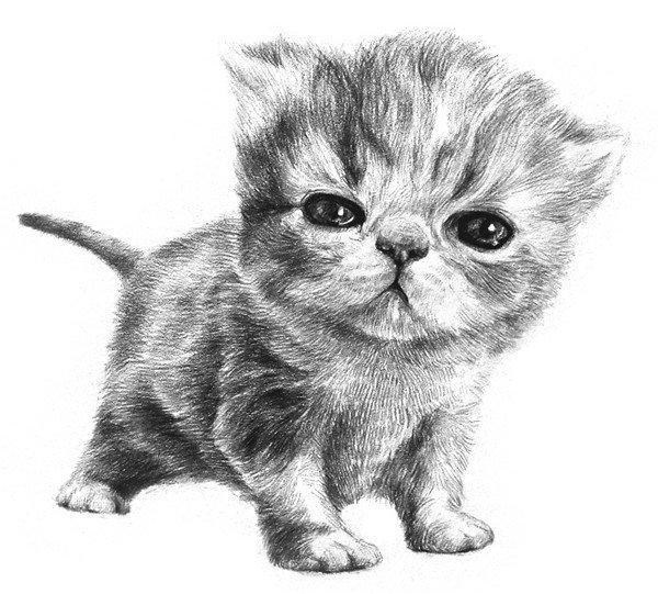 10、为尾巴和前脚也都画上毛发。  素描小猫咪的绘画步骤十 11、深化细节,把猫的腹部、猫头边缘、靠近耳朵的地方,还有尾巴的下部进一步加深,一只毛茸茸、肉鼓鼓的小猫就画好啦。  素描小猫咪的绘画步骤十一 小猫身上的毛是从脖子往下长的,胸前往后长的,所以绘画时注意要顺着毛发生长的方向排线。