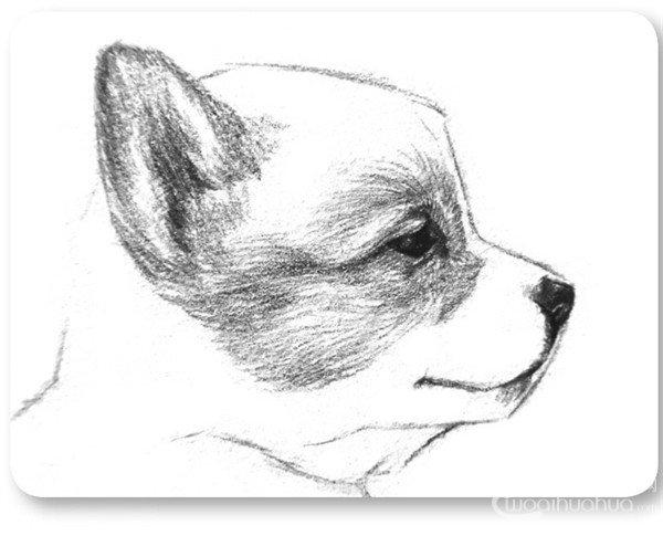 学画画 素描教程 素描动物     3,用之前的方法刻画出小狗的眼珠子,从