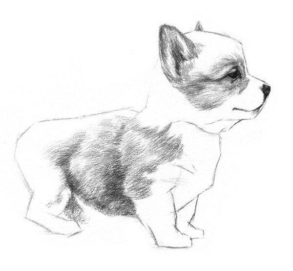 素描小狗的绘画步骤教程六