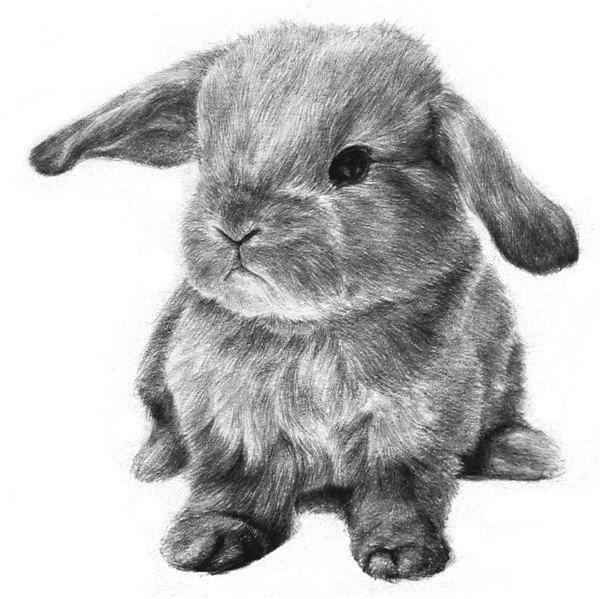 小兔子的绘画步骤