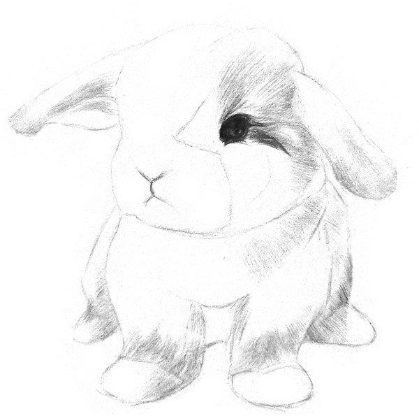 3、在暗部粗略地上一层阴影,线条尽量沿着毛发的方向呈放射状排布。  素描兔子的绘画步骤三 4、刻画小兔子的眼睛。注意眼睛有一层薄薄的双眼皮。  素描兔子的绘画步骤四 5、加深鼻线和唇线,鼻子上部用短线画一点毛发,鼻线上面稍亮一点,这样看起来小鼻子会有点鼓鼓的。  素描兔子的绘画步骤五