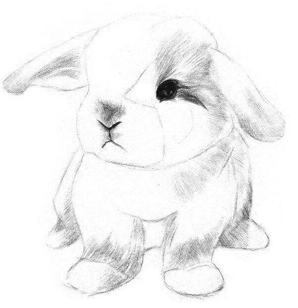 素描动物入门:素描小兔子的绘画步骤(2)