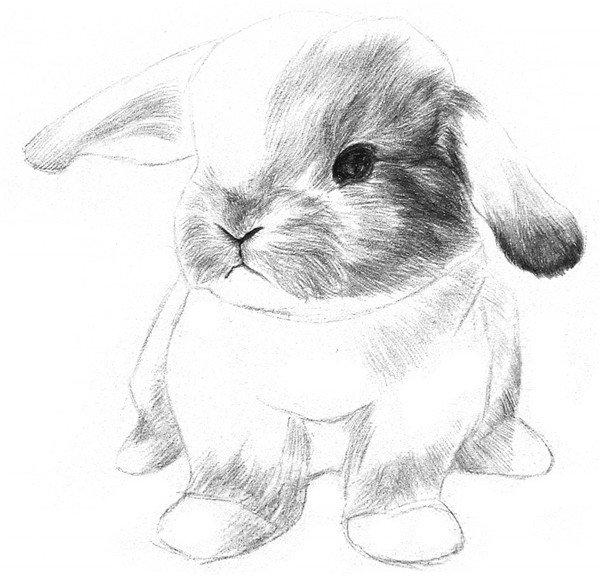 6、从鼻子开始向外画脸上的毛发,线条尽量画得长而软,带一点弯曲,显得小兔子的毛发很柔软。  素描兔子的绘画步骤六 7、加深脑袋后部的毛发,把耳朵尖和耳朵根部的毛发也加深一点。  素描兔子的绘画步骤七 8、刻画身体暗部的毛发,线条画得细密些,长而软,带一点弯曲,毛发边缘的地方画得虚一些。  素描兔子的绘画步骤八