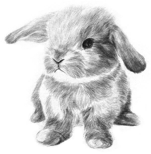 9、刻画浅部的毛发,毛发深度不要超过刚才画的暗部毛发。  素描兔子的绘画步骤九 10、仔细刻画一下身体和四肢,将毛发画得更紧密、整齐,加深四只脚,前脚画出脚趾,身子和地面靠近的地方进一步加深。  素描兔子的绘画步骤十 11、细致刻画小兔子的脸部,将口鼻周围的毛发画得更细致些。  素描兔子的绘画步骤十一