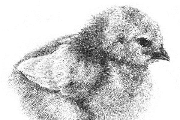 3d立体画素描动物 动物世界