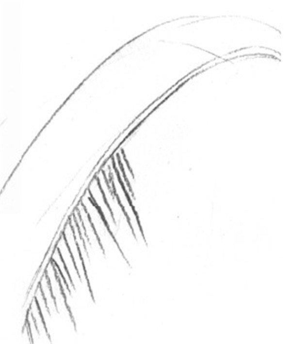 静物素描:椰子树叶的绘画步骤(2)