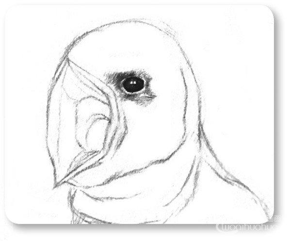 素描小燕子绘画步骤(2)
