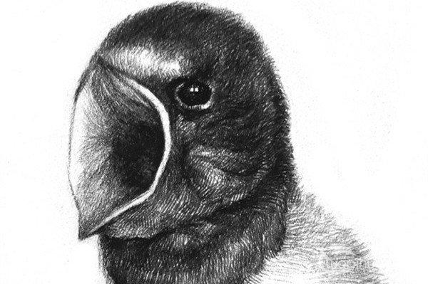 分享素描动物入门:小燕子的画法