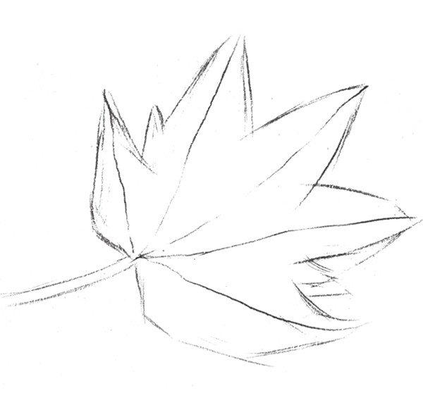 静物素描枫叶的绘画步骤