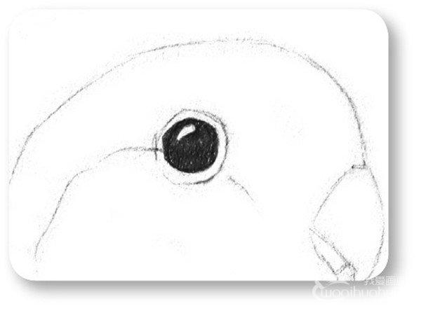 素描小鹦鹉的绘画教程(2)_素描教程_学画画_我爱画画