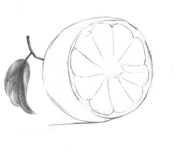 素描橙子的绘画步骤三