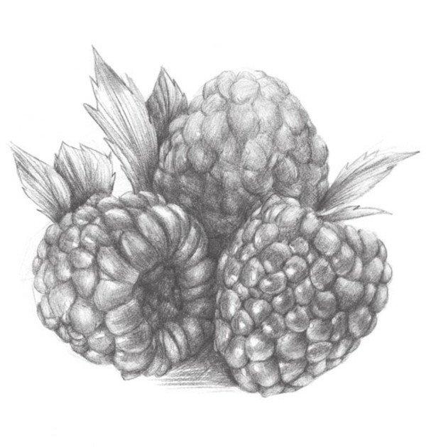 静物水果树莓的绘画步骤教程