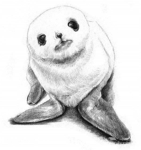 学画画 素描教程 素描动物             6,在胸前和腹部位置画上毛发