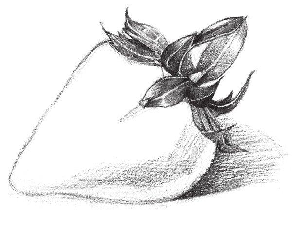 素描草莓的绘画步骤教程三