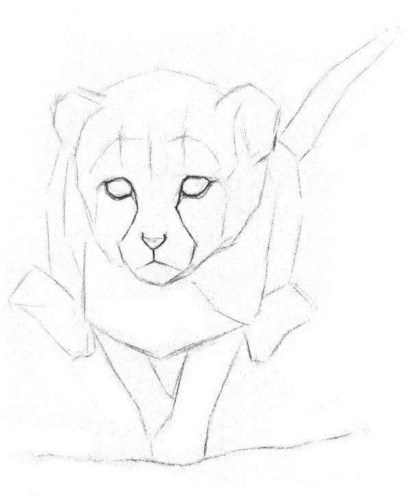 素描小豹子的绘画步骤教程二