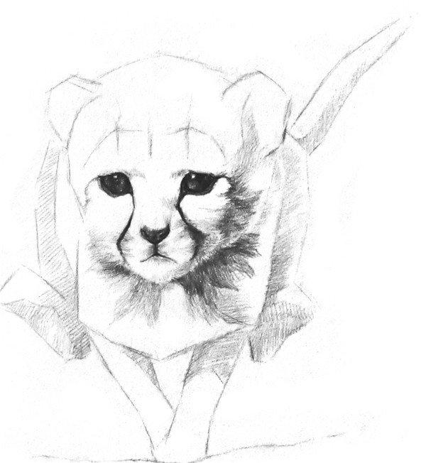 素描小猎豹入门绘画教程(2)