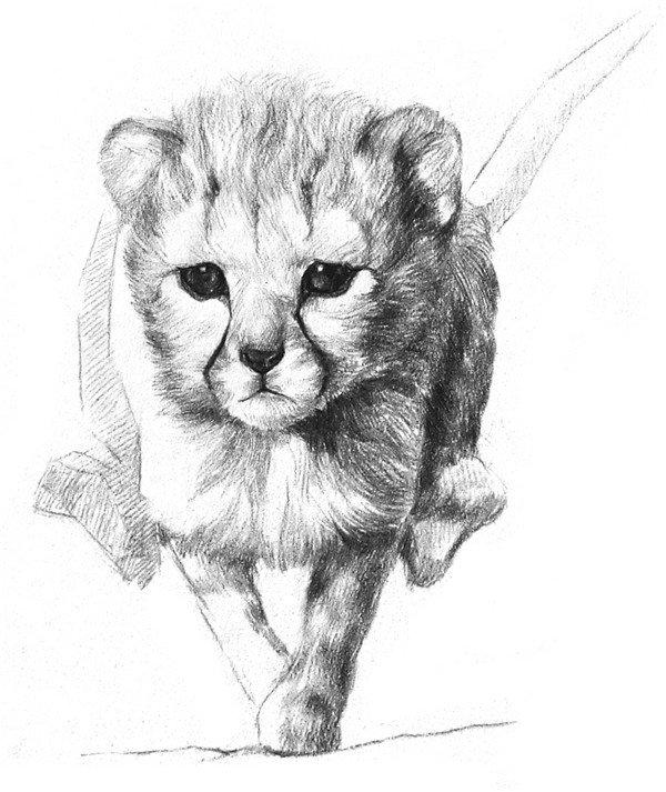 学画画 素描教程 素描动物     6,继续从脸的中间向外呈放射状地画好