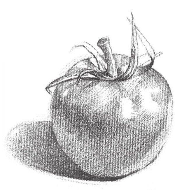 素描蔬菜西红柿的