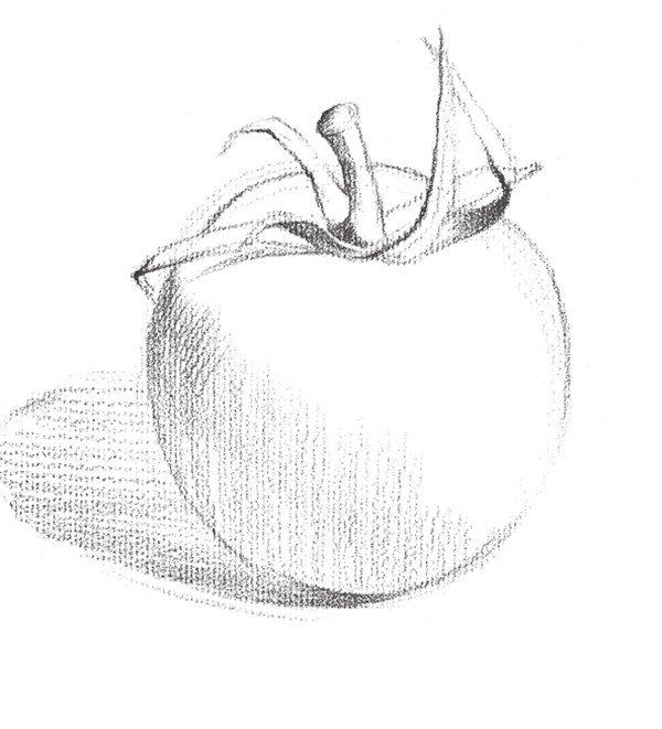 素描西红柿的绘画技法步骤三