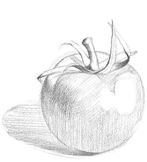 素描西红柿的绘画技法步骤四