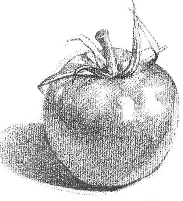 4、继续分明暗,留出西红柿高光位置。  素描西红柿的绘画技法步骤四 5、加重西红柿的叶子并加深阴影。  素描西红柿的绘画技法步骤五 6、继续按照物体形态刻画,深入调整,这样西红柿就画完了。  素描西红柿的绘画技法步骤六