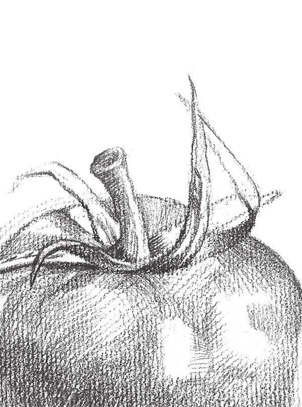 素描西红柿的绘画技法(4)
