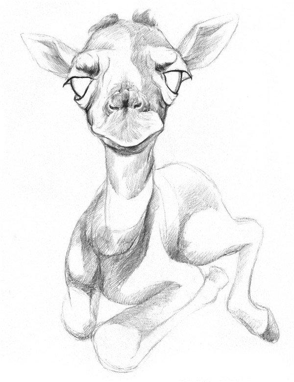 学画画 素描教程 素描动物     3,在脸部粗略地上一层阴影,用较深的线