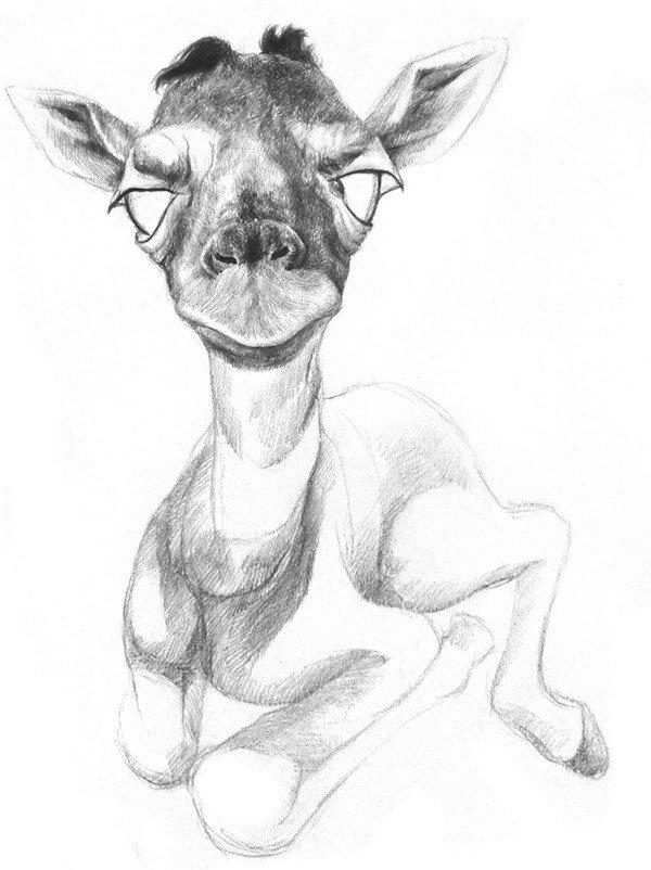 素描长颈鹿的绘画步骤五