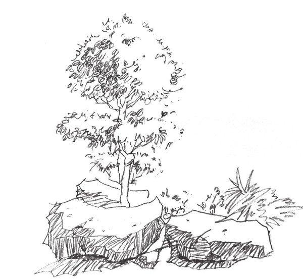 素描大树的画法-速写单个树木的四中技法 5图片