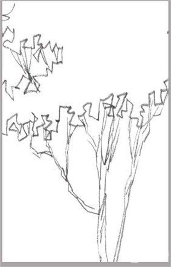 大树的基本结构图片