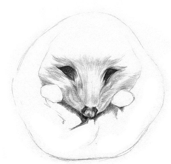 学画画 素描教程 素描动物     5,从脸部中心线向两侧刻画小刺猬的