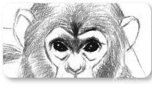 素描猩猩宝宝的绘画步骤(3)_素描教程_学画画_我爱网