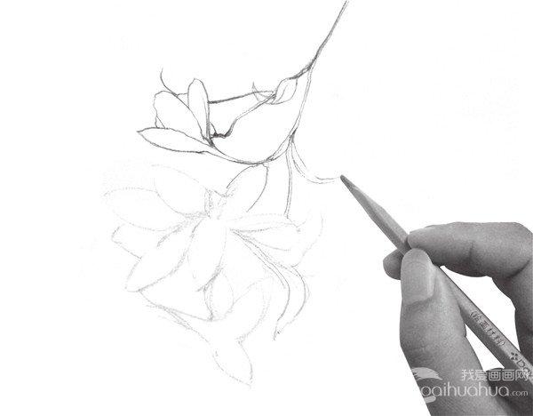 速写喇叭花的画法步骤三