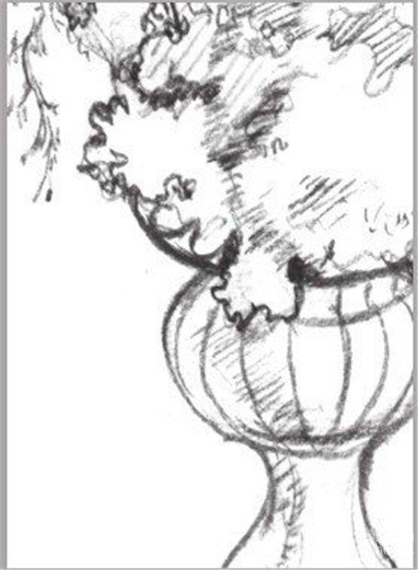 速写盆花的绘画步骤教程-1