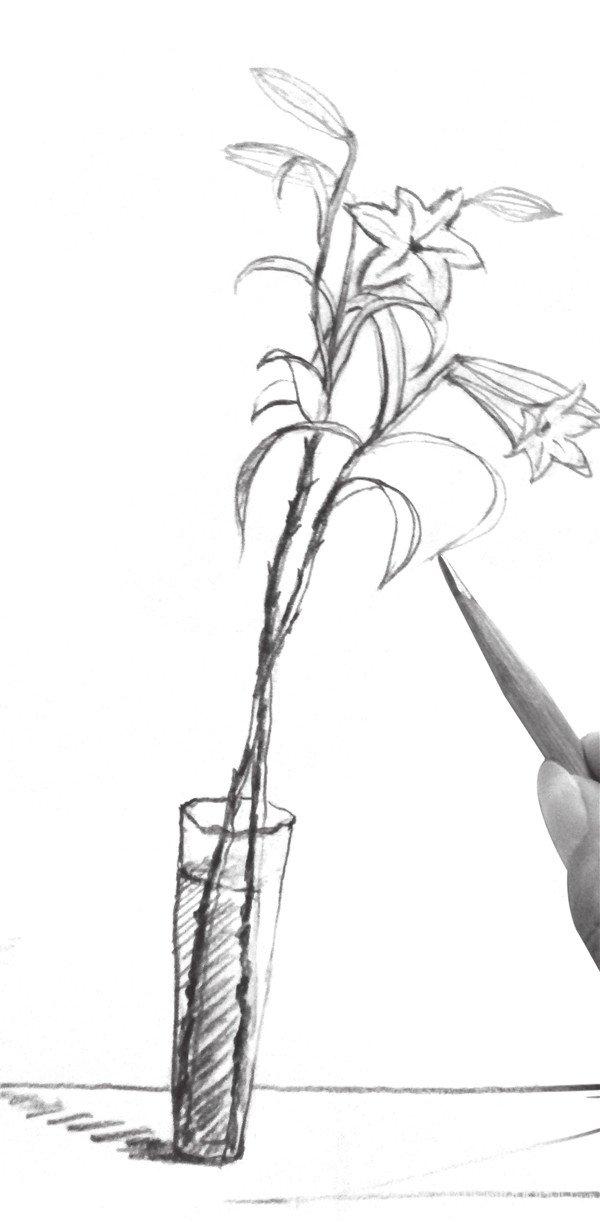 9、最后整体再修饰调整一下植物部分,百合花就完成了。  速写百合花的绘画步骤九 百合花,全球已发现有至少120个品种,其中55种产于中国。近年更有不少经过人工杂交而产生的新品种,如亚洲百合、香水百合、火百合等。鳞茎含丰富淀粉,可食,亦作药用。