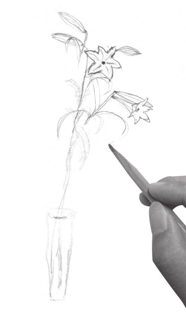 3、修改叶子部分,注意叶子的形态,表现叶子的美感。  速写百合花的绘画步骤三 花卉的形状不规则,姿态多样,在刻画时要多观察、多对比,塑造出准确的形体,线条要柔和、流畅,表现出花卉唯美的质感。 4、加强百合花的轮廓线条,增加其体积感。  速写百合花的绘画步骤四