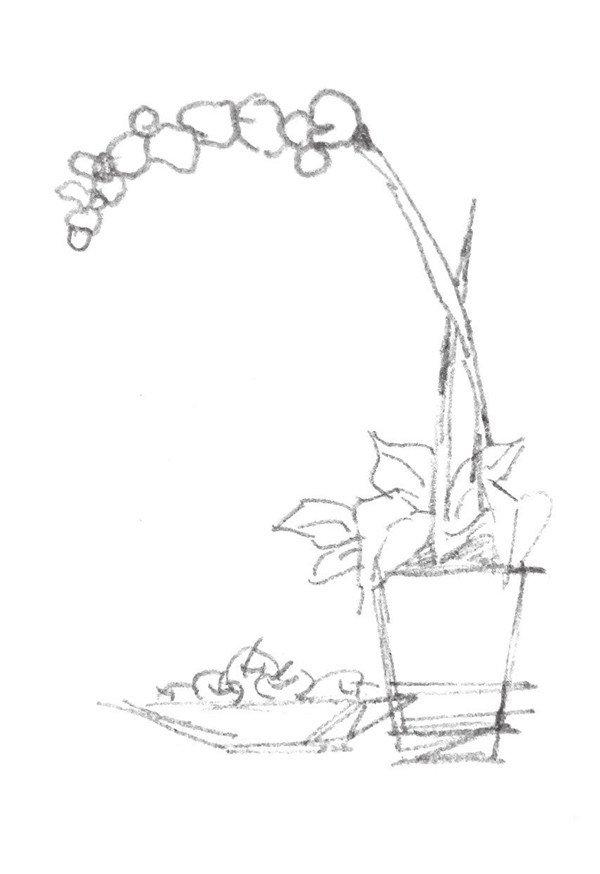 速写植物的绘画步骤(2)