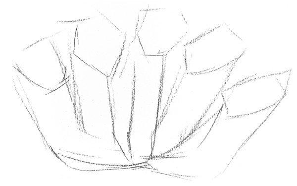 素描植物瓶子草的绘画教程(2)