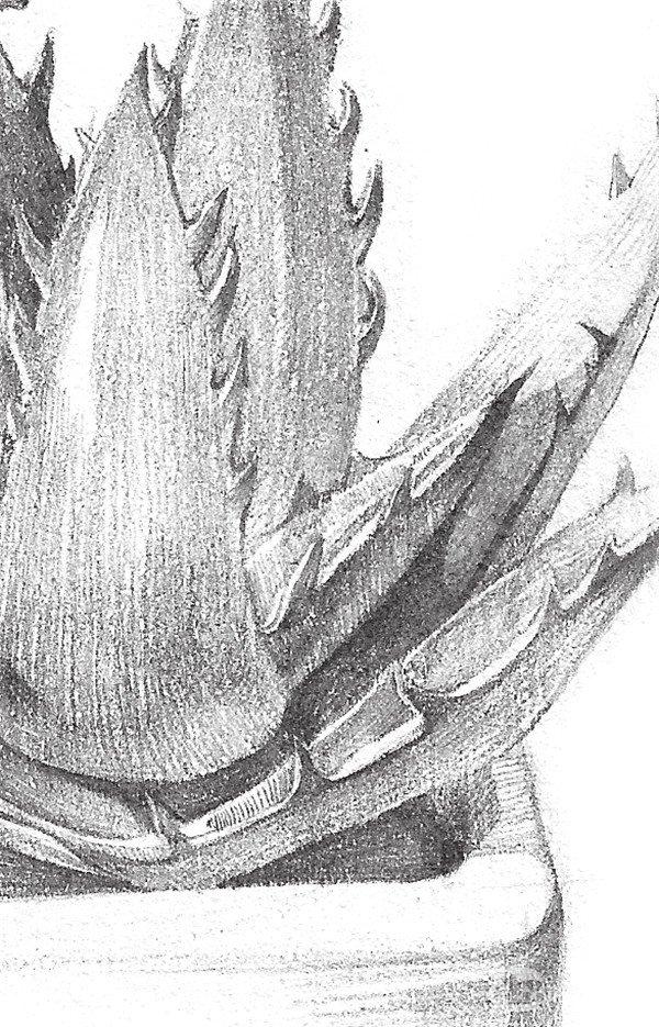素描芦荟的绘画步骤(4)_素描教程_学画画_我爱画画网