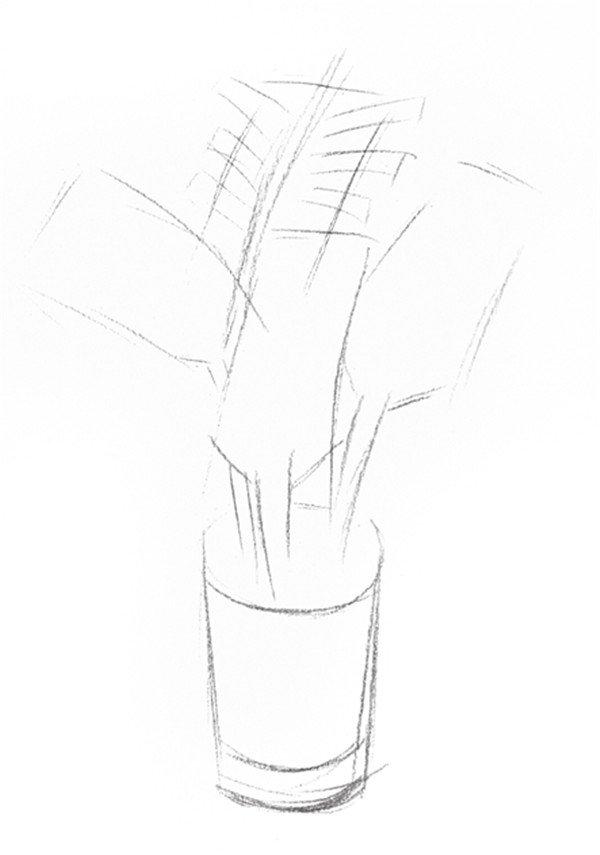 素描椰子树的绘画步骤二