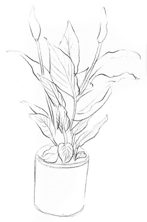 局部种植设计图手绘