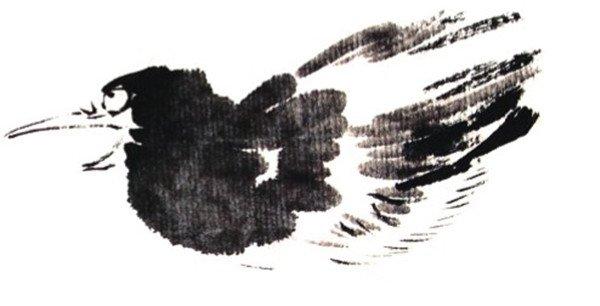 1、用深墨勾画嘴,浓墨画眼睛。  国画喜鹊的画法步骤教程一 2、用浓墨点头、颈、胸和脊部,颜色逐渐减淡。  国画喜鹊的画法步骤教程二 3、勾画两侧翅膀及羽毛。  国画喜鹊的画法步骤教程三 4、勾画腹部、脊背。  国画喜鹊的画法步骤教程四 5、用浓墨顺势两笔向右上画尾巴,两侧补羽毛。  国画喜鹊的