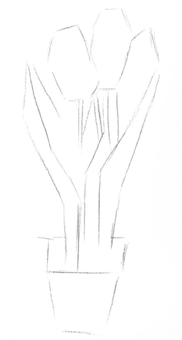 素描郁金香的绘画步骤二
