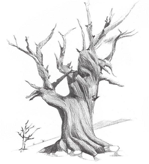 素描木头纹理图片大全