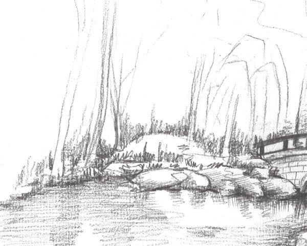 素描植物园的绘画步骤四