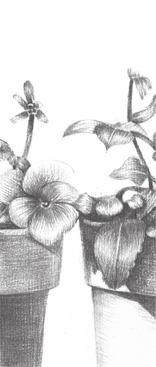 素描盆栽的绘画教程(6)_素描教程_学画画_我爱画画网