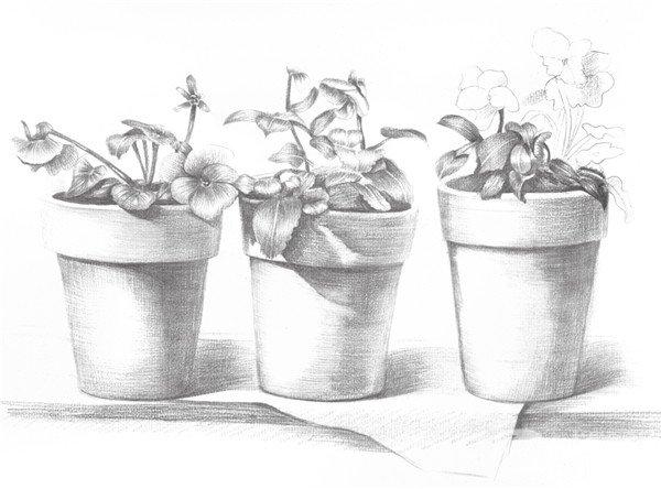 7、继续完善花卉的叶子,使画面的真实感觉更加强烈。加深植物的暗部色调。  素描院内盆栽的绘画步骤七 8、按照同样的方法继续画另一盆植物的叶子与花朵。  素描院内盆栽的绘画步骤八 9、开始局部深入,细节是绘画的重中之重,细节是画面成功的关键,在绘画时要明确这一点。  素描院内盆栽的绘画步骤九