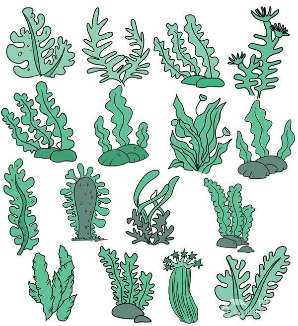 蔬菜类简笔画(6)